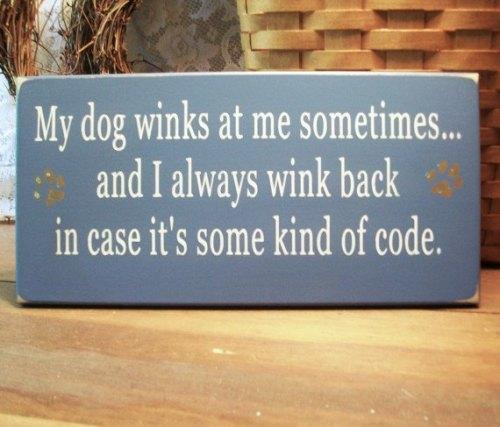 Dog Winks
