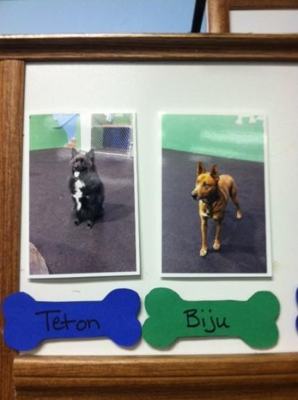 Doggie Daycare #3