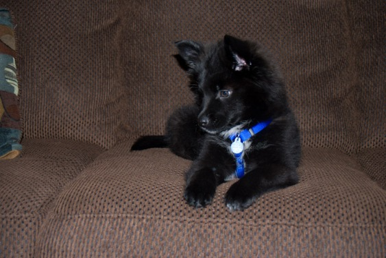 Teton Puppy 2