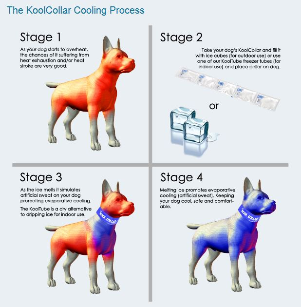 KoolCollar Cooling Process