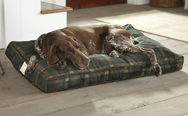 Orvis Bed