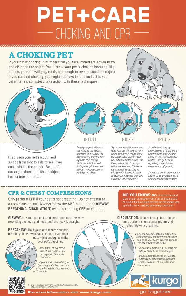 dog-cpr-infographic