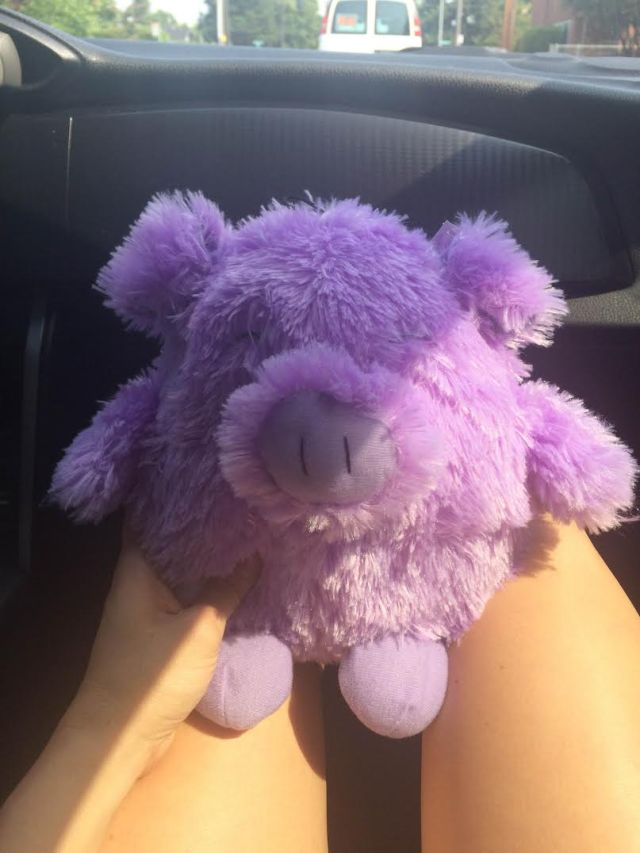 Purple Pig 1