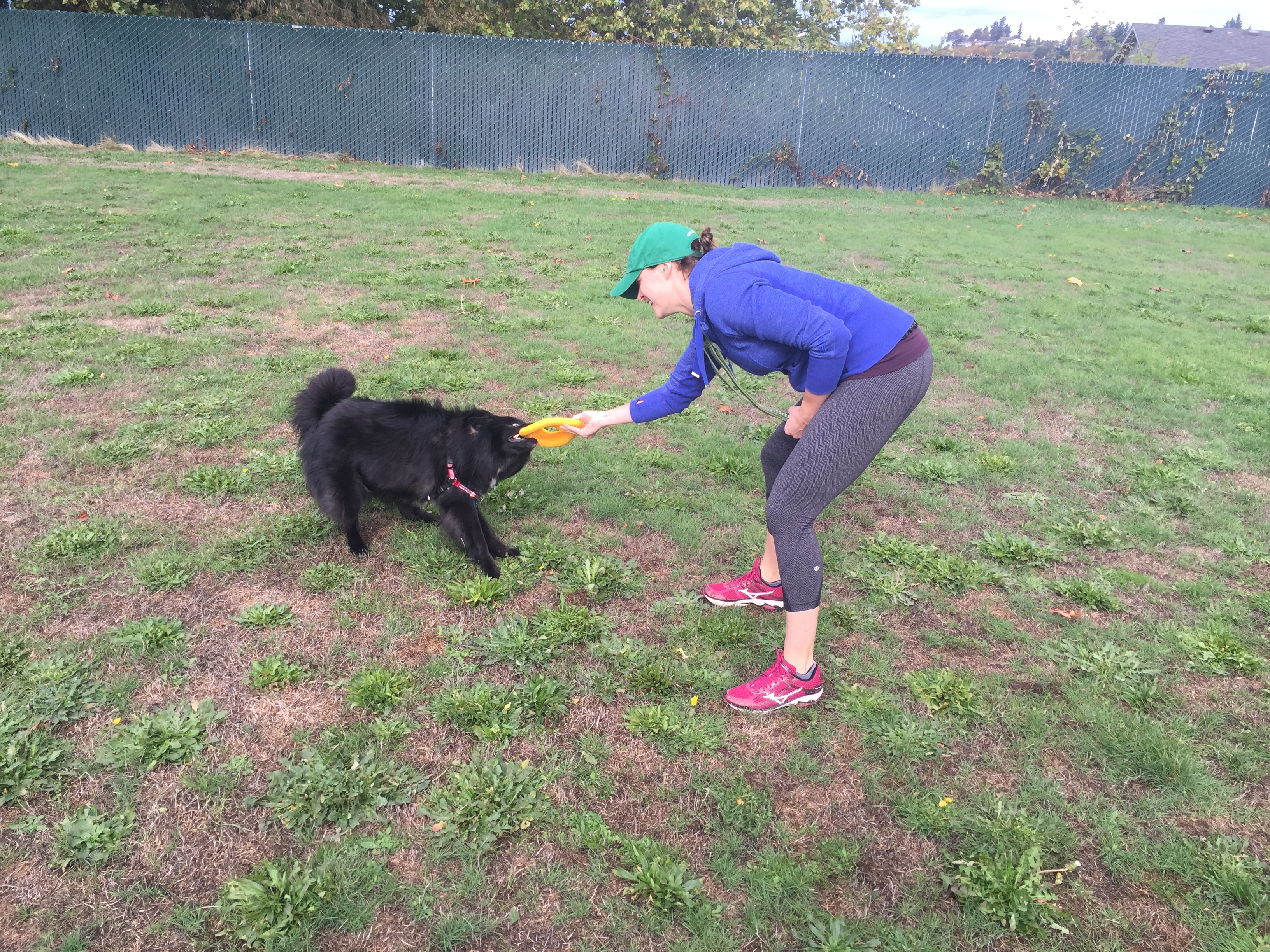 The Zogoflex Air Dash Frisbee Is $17 On Chewy If You're Looking For A New  Toy To Throw For Your Dog In Your Yard Or At Your Local Dog Park,