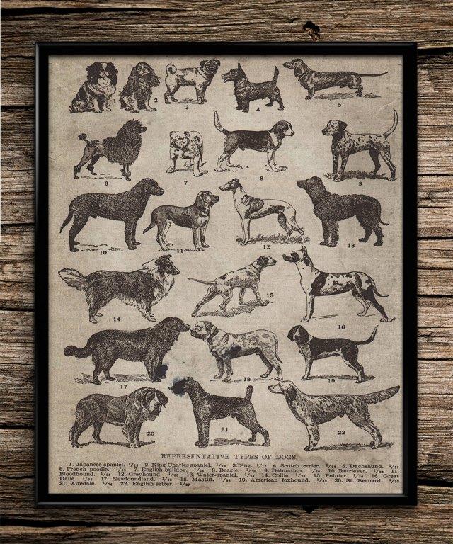 Vintage Dog Poster